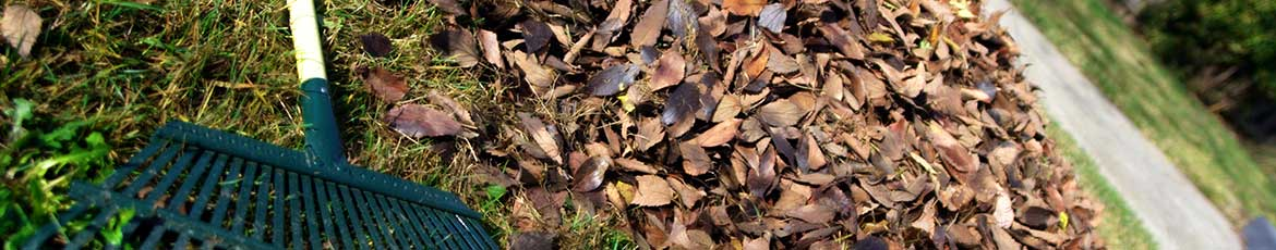 Clearing leaves and debris