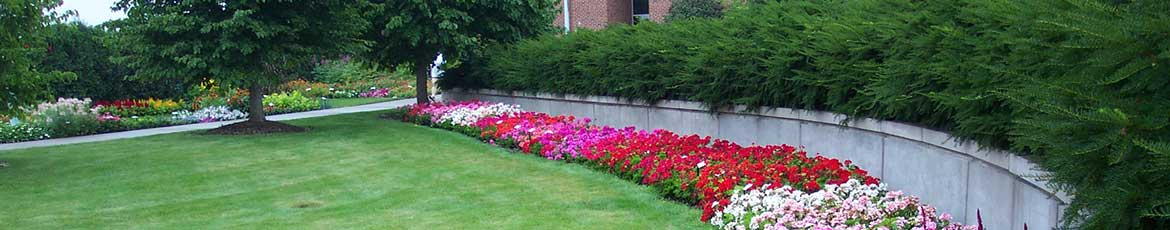 Seasonal bedding plants